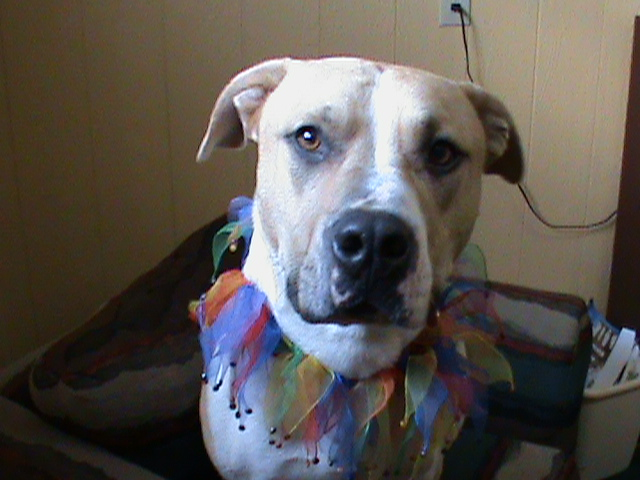 Lewis and Clark County Animal Happenings: Dark Times