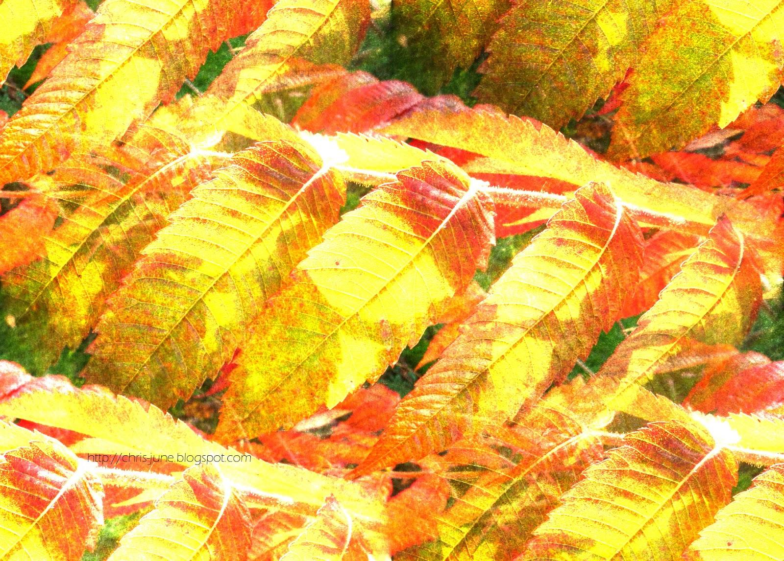 leaves3 - kk-monday - dodge