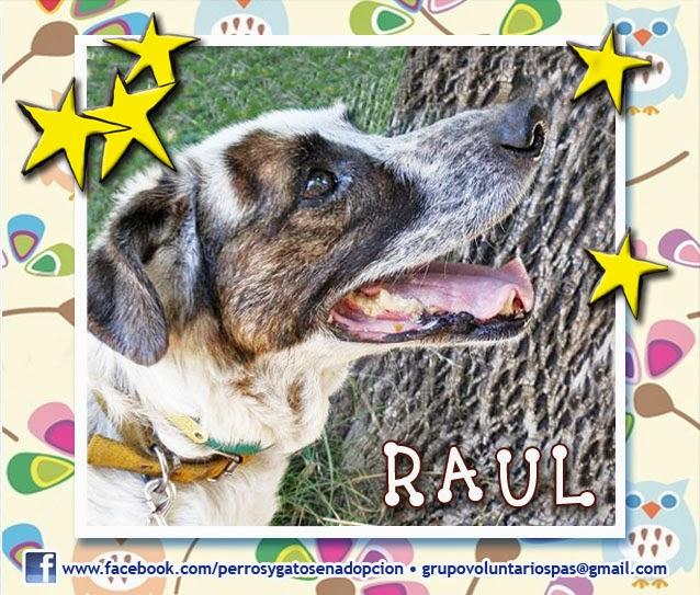 Perros y Gatos en adopción 2016: Raúl se convirtió en una