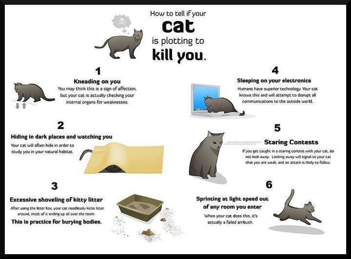 cat kill jjbokrkman.blogspot.com