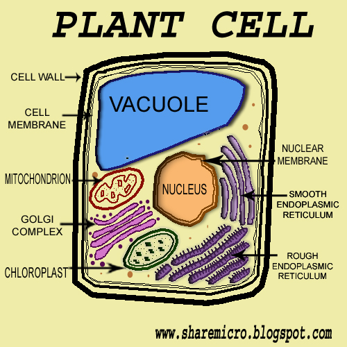 Plant Cell Labeled | New Calendar Template Site