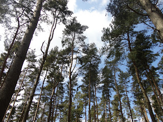 Tree Tops at Bow Brickhill Woods
