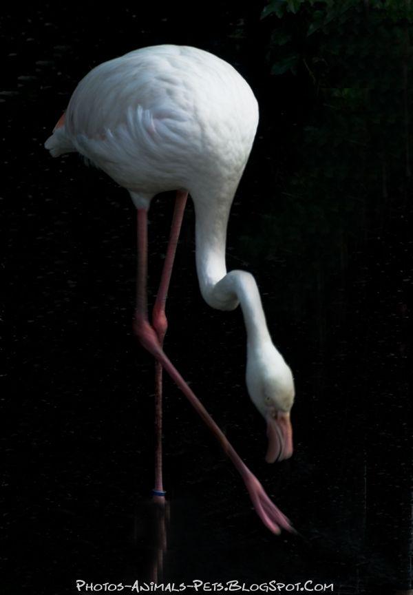 http://1.bp.blogspot.com/-8hfiliErmG4/Tts7jGYX8dI/AAAAAAAACYs/xv4FXnVvlCY/s1600/flamingos%2B.jpg