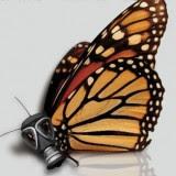 MonarchMonsanto-160x160