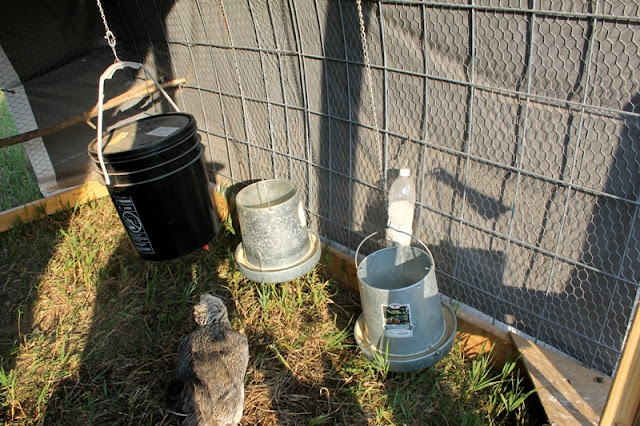Metal feeders and homemade oyster shell dispenser