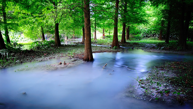 Mist Nature Forest Trees Water HD Wallpaper