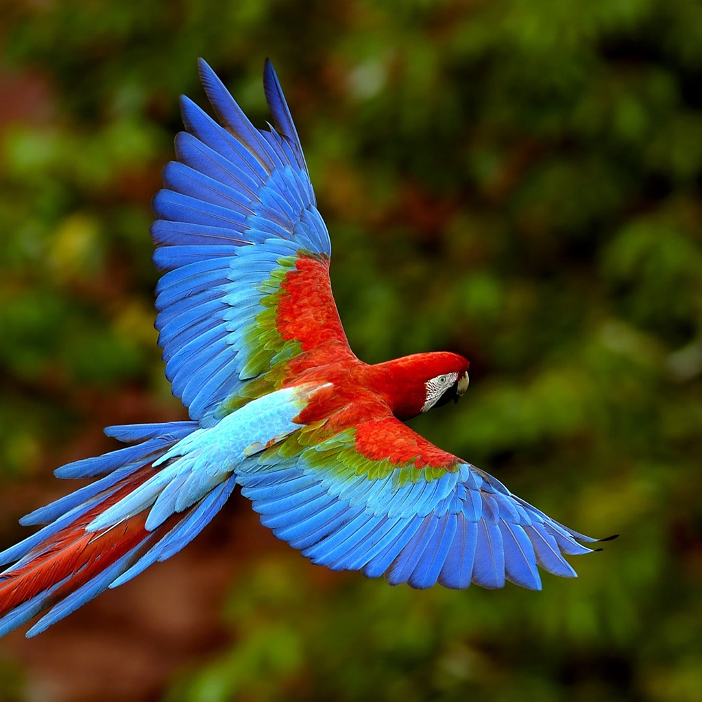 http://1.bp.blogspot.com/-8i_fZMIGLxU/Tr8frQoyOoI/AAAAAAAAASA/YTzdlGUQtIs/s1600/colorful-parrot-1024x1024.jpg