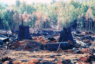 Ancient forest destroyed by Forestry Tasmania