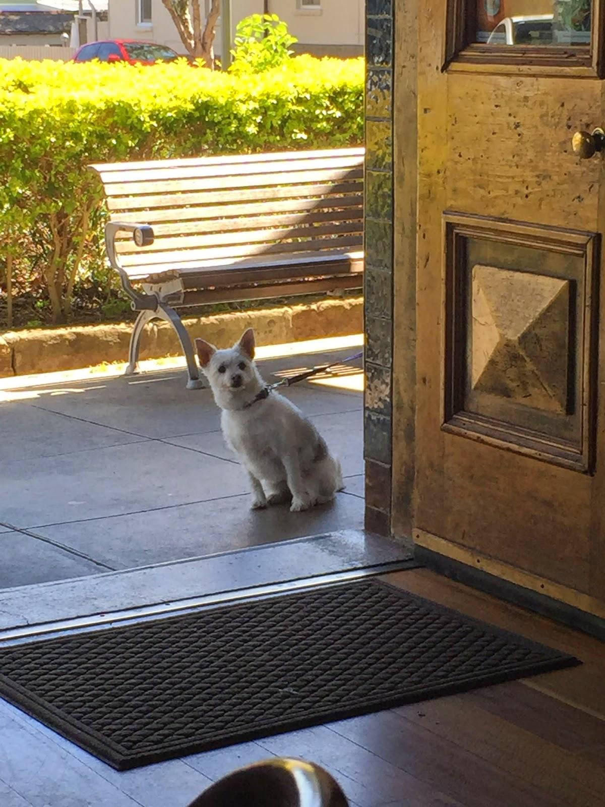 Cassie Cakes Sydney Review Revolver Cute Dog Brisbane Blog Food