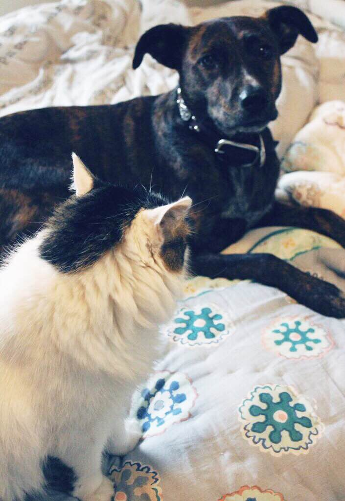 oddly lovely blog caturday