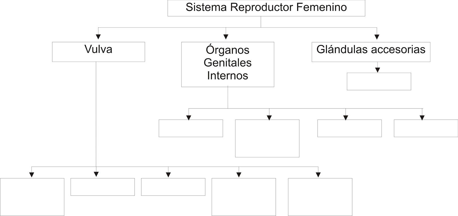 Biología: Sistema Reproductor