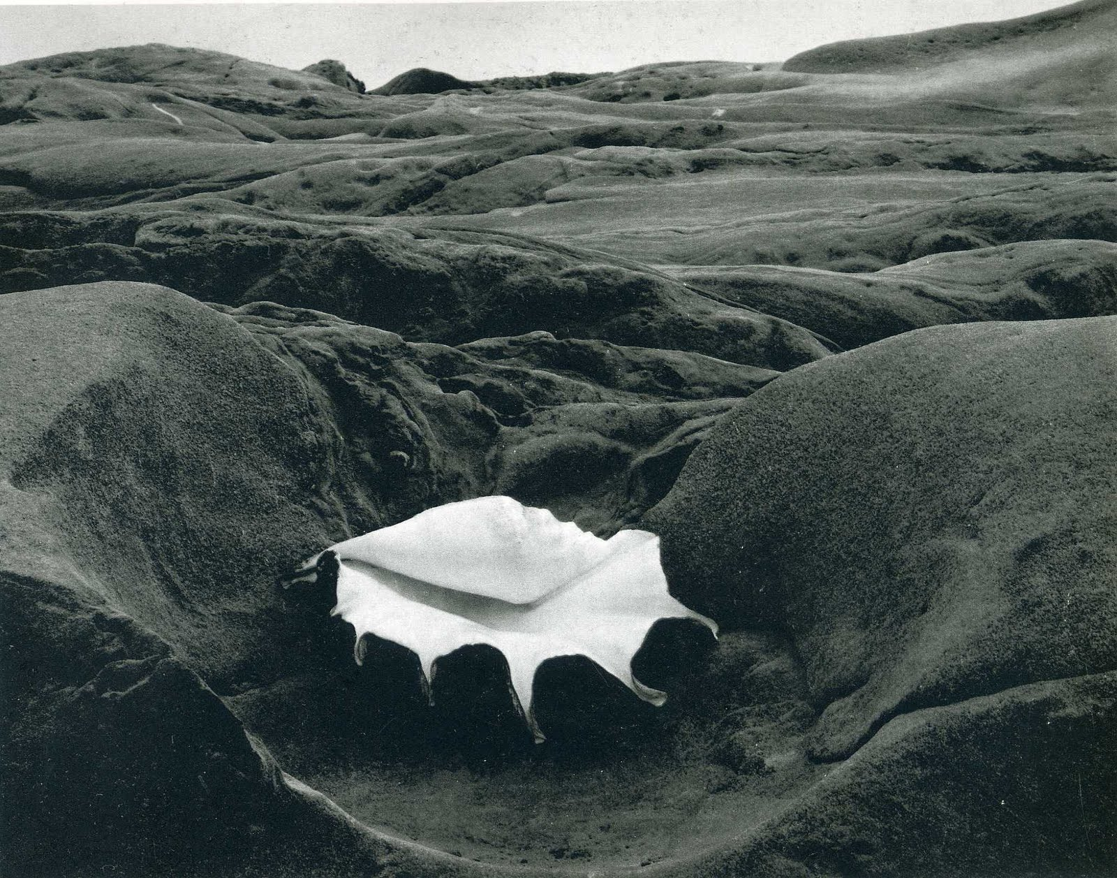 The Photography Files Edward Weston