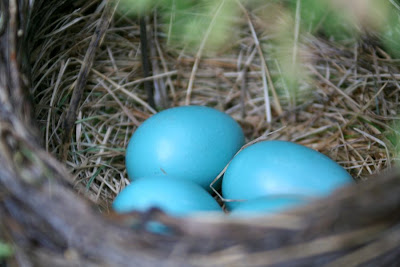 Life in motion: robin eggs (Focus on Life, week 17) :: All Pretty Things