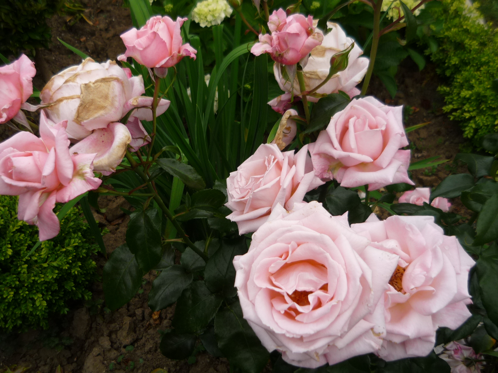 Roses, Lace and Brocante: SUMMER FRAGRANCE