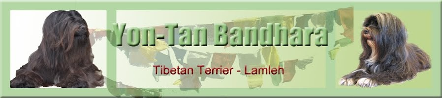 Yon-Tan Bhandara Tibetan Terrier
