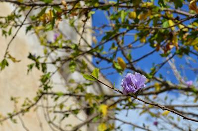 hojas blogger traveller - c. araus