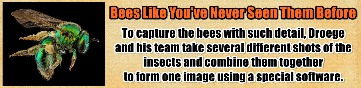 http://www.nerdoutwithme.com/2014/02/bees-like-youve-never-seen-them-before.html