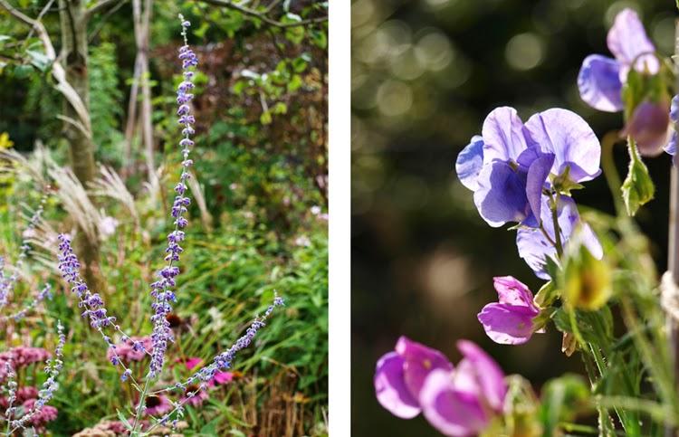 Blå blomster i haven