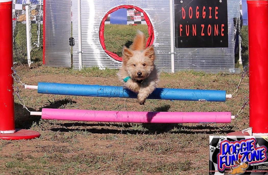 June at Doggie Fun Zone, San Jose