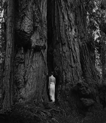 Photo stitched self portrait in the redwoods California