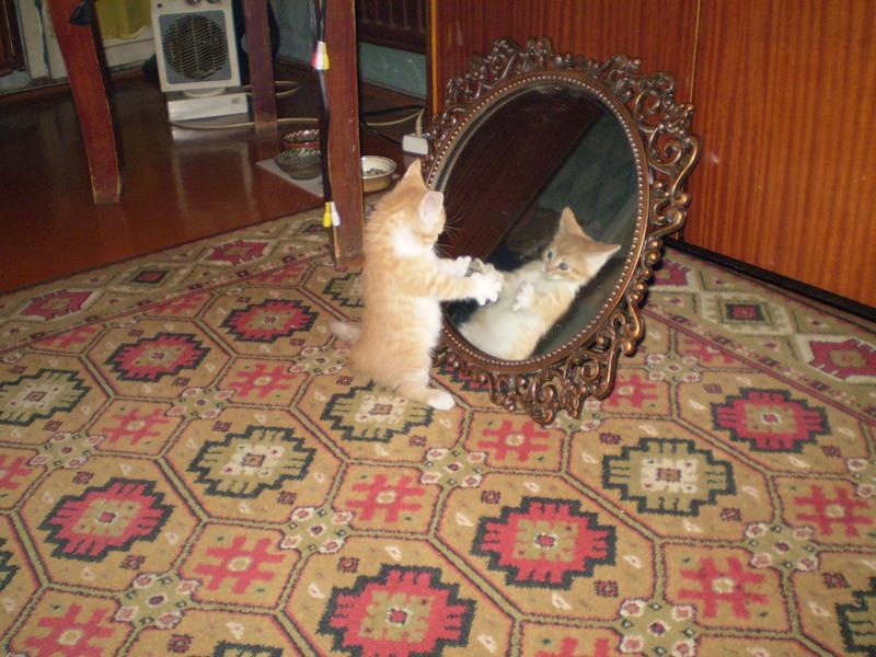 - прикольные коты 22-11-12