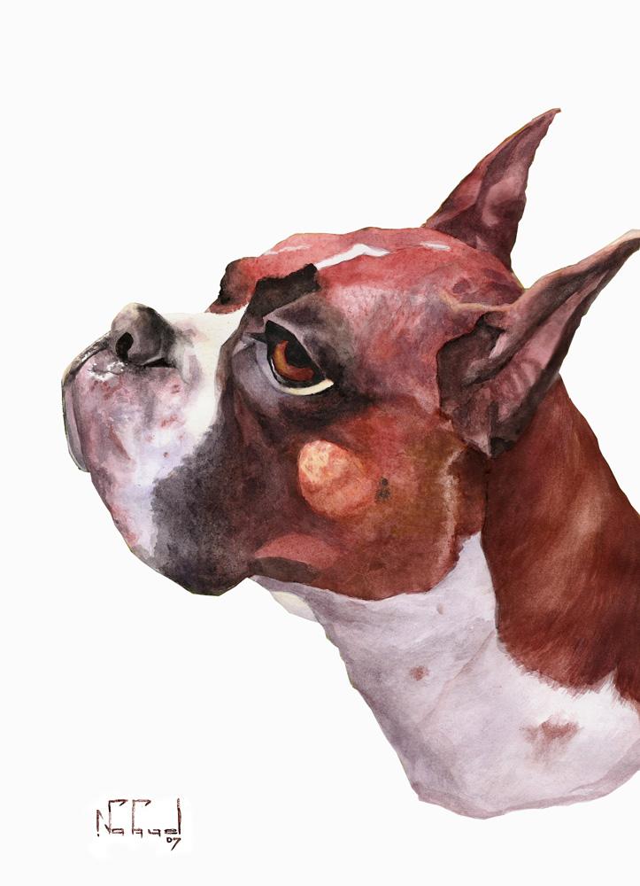 Tip Caricaturas: Caricatura de perros