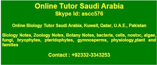 Online Tutor Saudi Arabia - Online Tuition Saudi Arabia