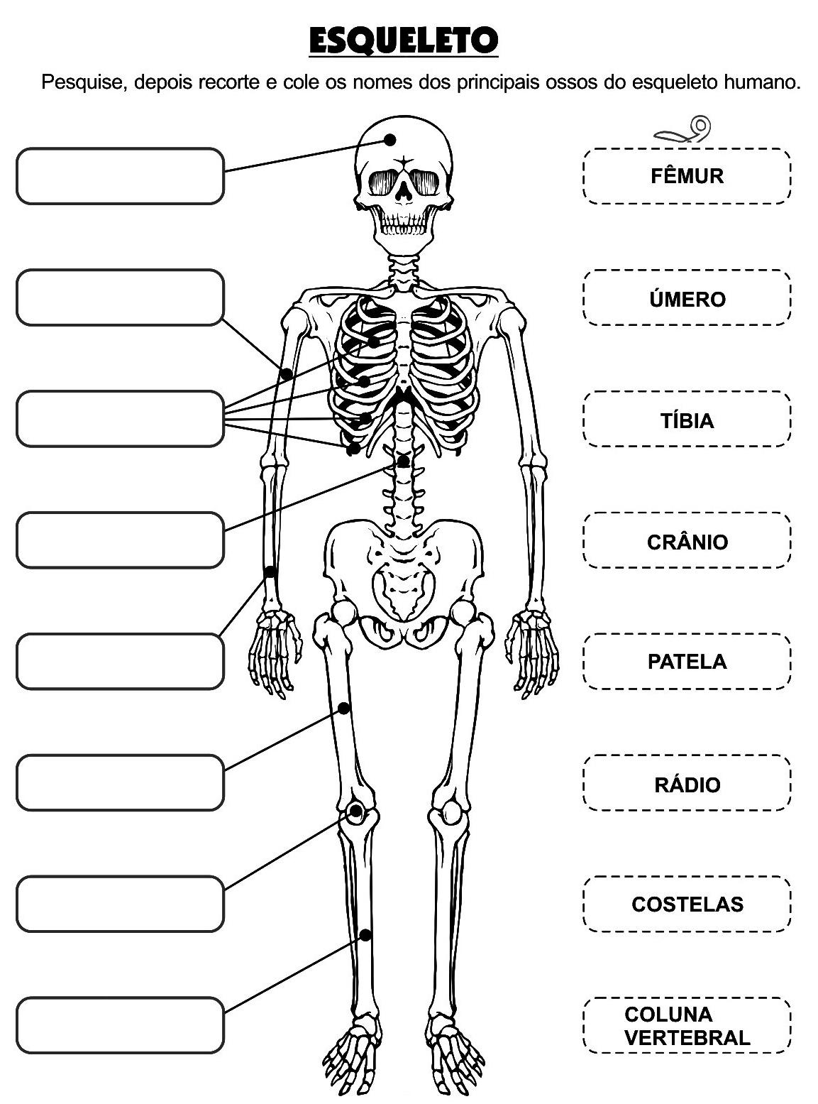 Atividades da tia: ATIVIDADES CORPO HUMANO 3° 4° 5° 6° ANOS ...