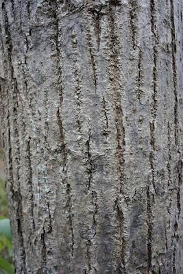 Balade au fil du temps reconnaitre les arbres par leurs corces - Reconnaitre les arbres par leur tronc ...