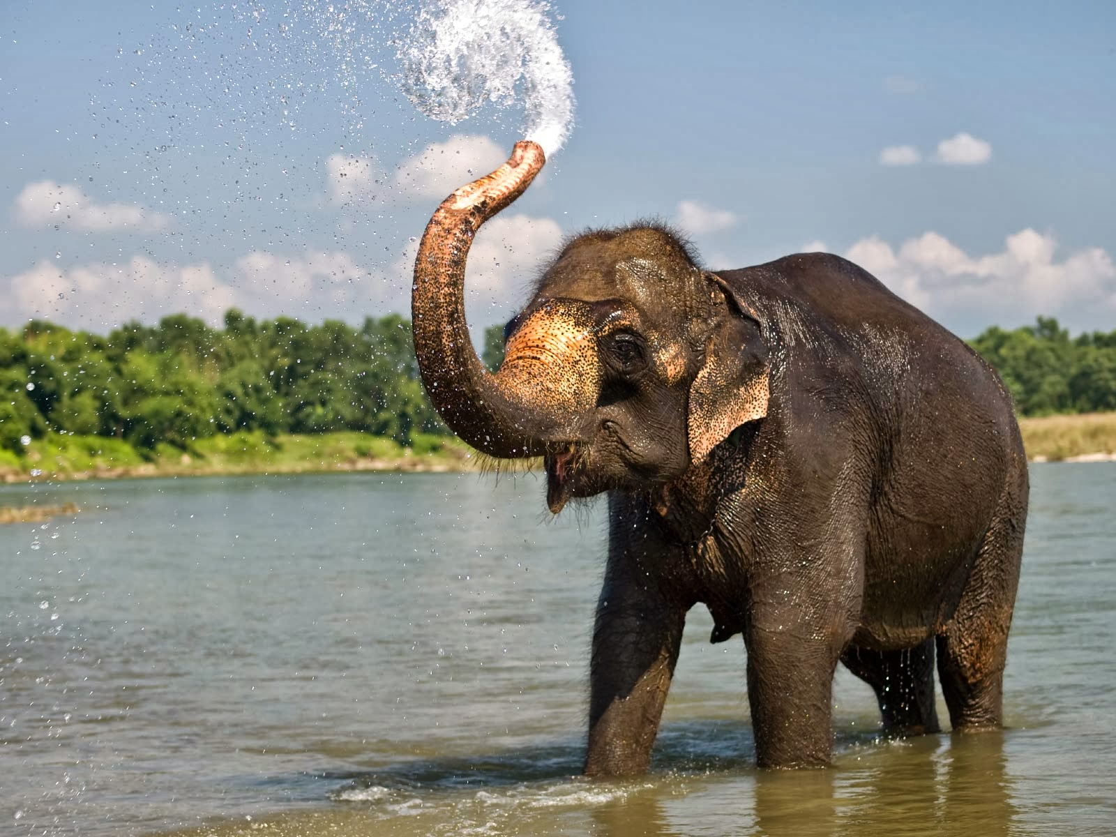 Elephant WallpapersElephant PicturesElephant FotosElephant PhotoElephant Download Images
