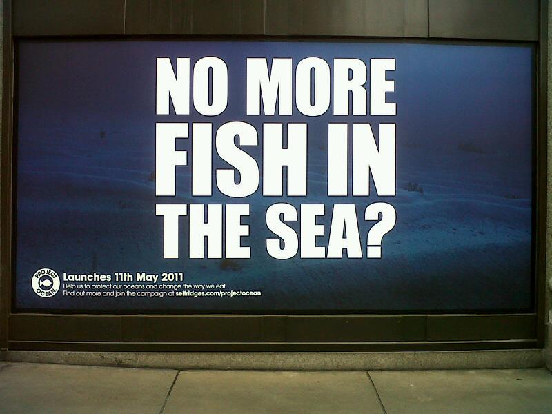 My stuff no sense no more fish in the sea for More fish in the sea