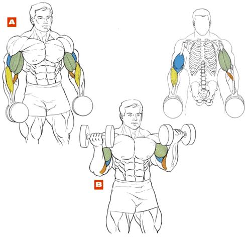 Бицепс в домашним условиях - Как накачать мышцы дома