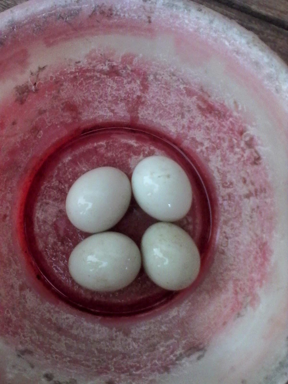 Cocos Nucifera Laporan Prektikum Pembuatan Telur Asin