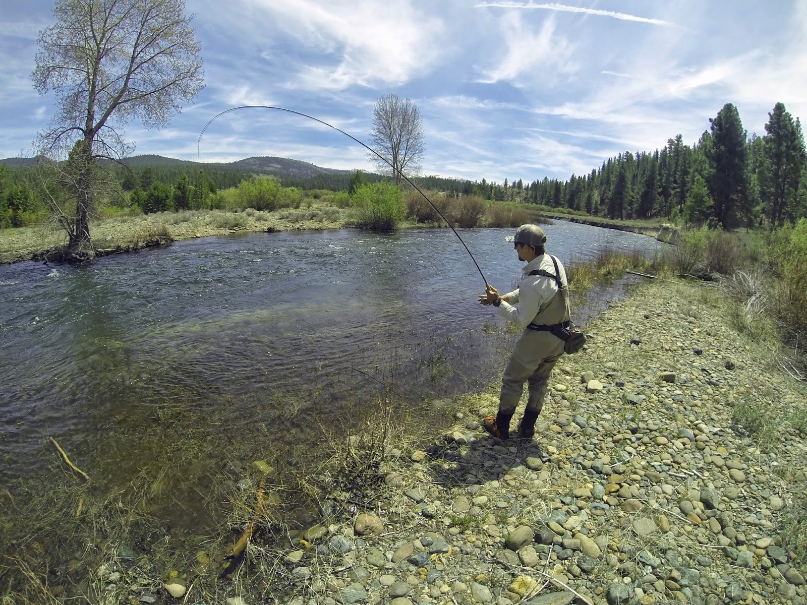 Jon baiocchi fly fishing news little truckee river for Truckee river fishing report