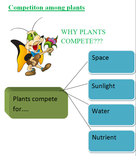 competition among plants Just as humans and animals compete to win a prize or gain an advantage, there  is also competition among plants this competition is both.