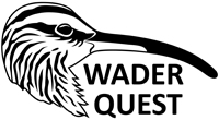 Become a Friend of Wader Quest & help shorebird conservation for £5