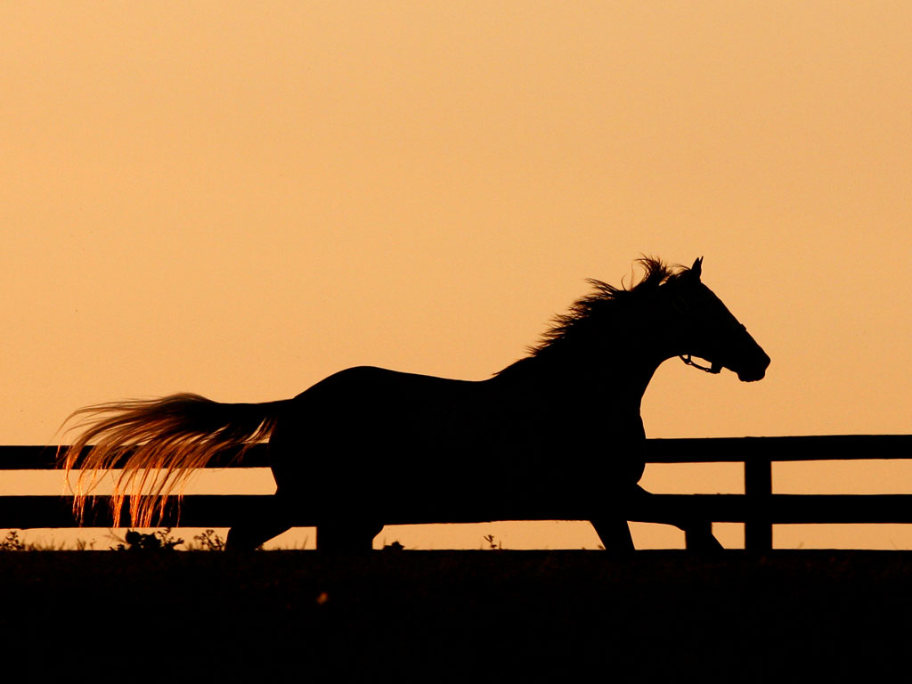 Horse Racing Wallpapers In Sunset