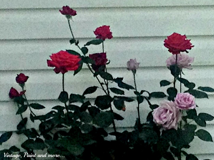 Vintage, Paint and more... last roses of summer