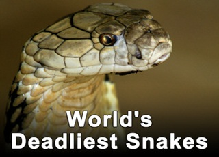 online documentary for snake