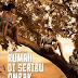 Film Rumah di Seribu Ombak 2012 (Bioskop)