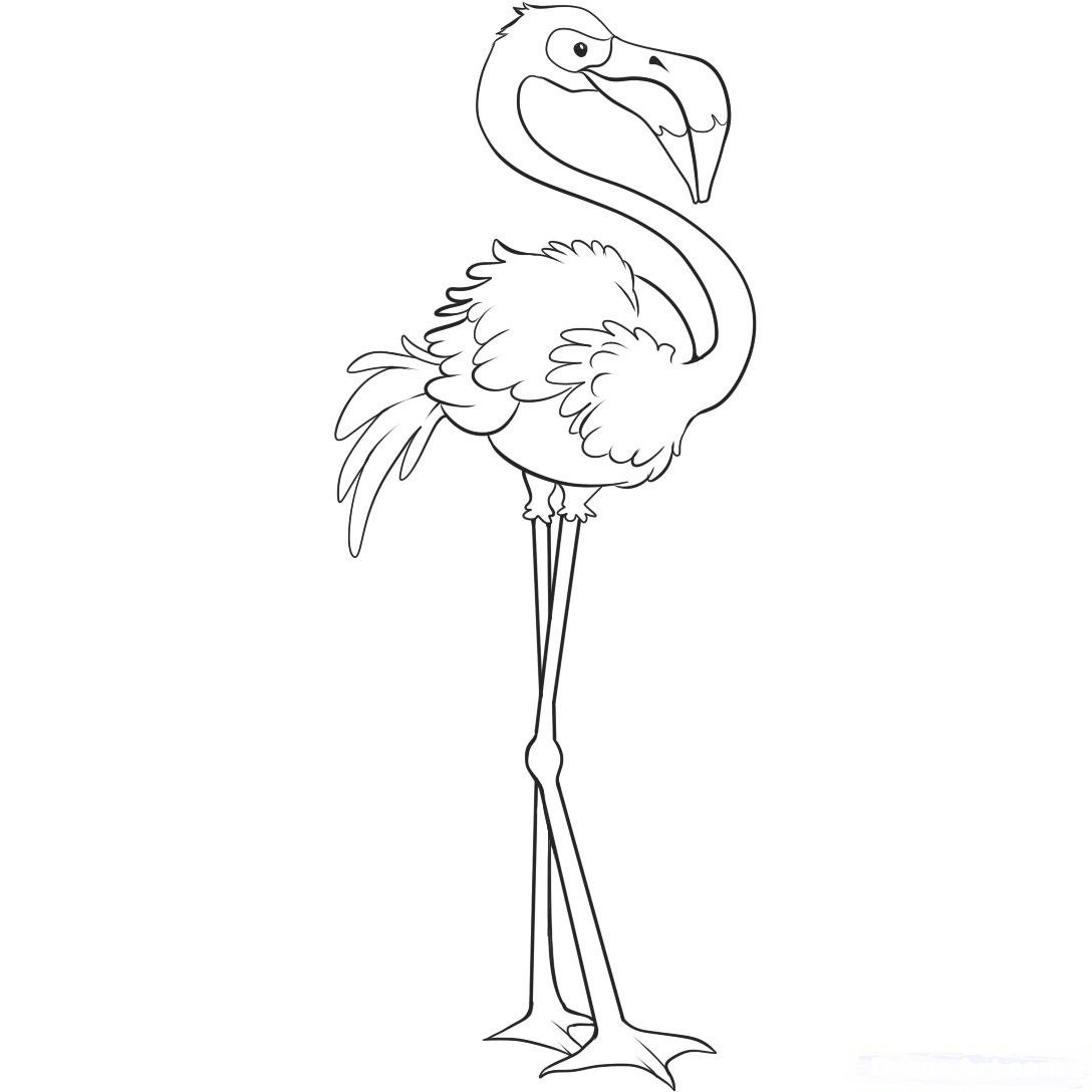flamingos coloring pages to kids birds animals - Flamingo Coloring Pages