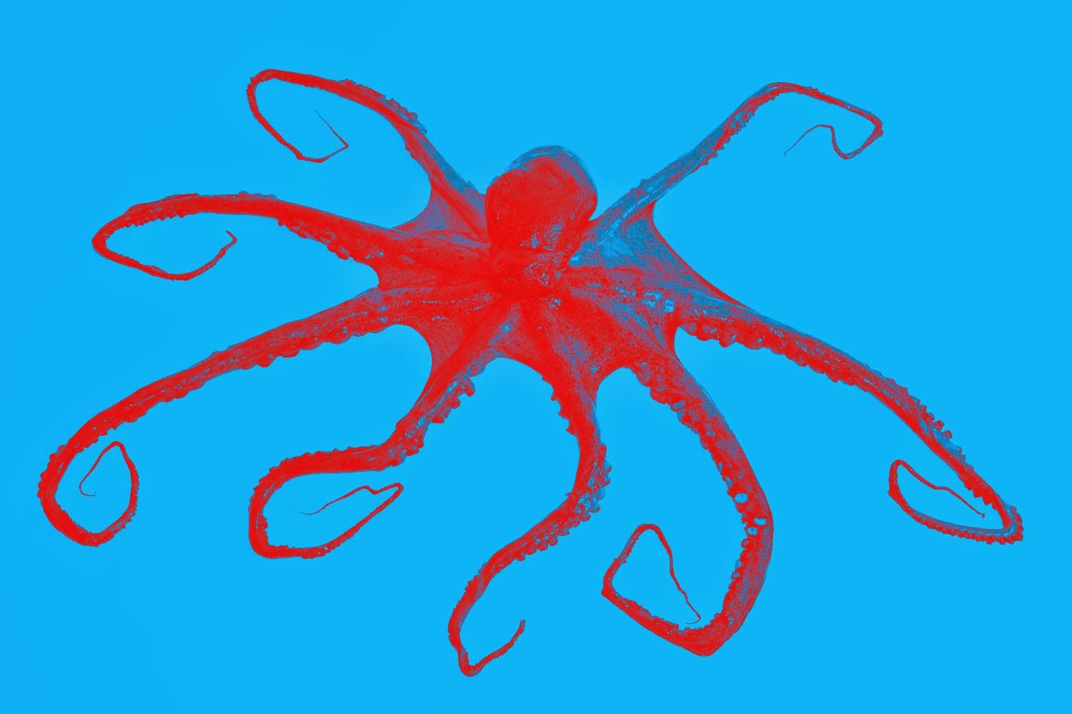 Octored
