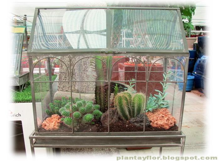 Urnas invernadero plantas Plantas de invernadero