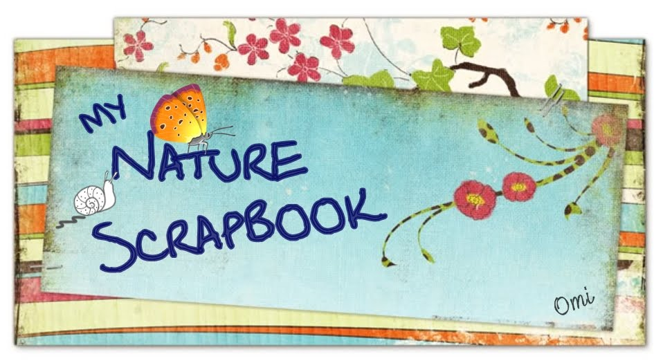My Nature Scrapbook