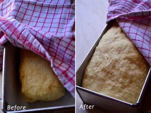 Adonan Honey Oatmeal Bread