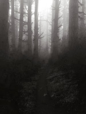 CF Winter Woods