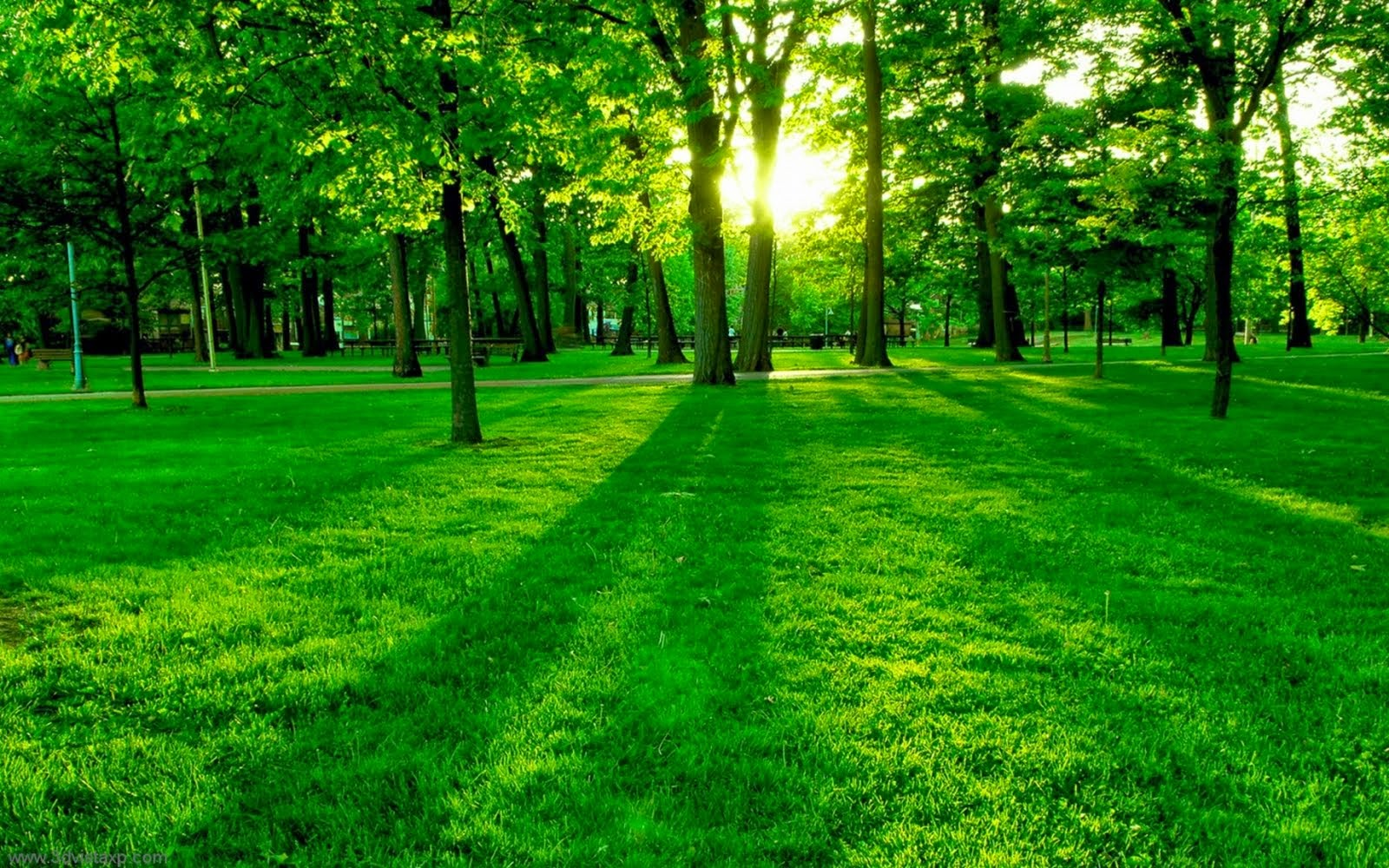 All Wallpapers Eye Soothing Natural Green Wallpaper