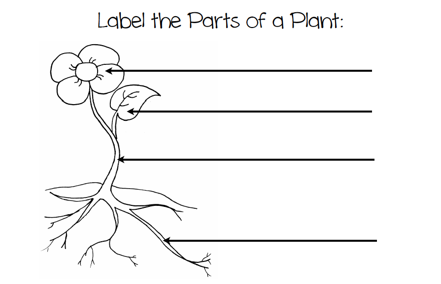 Author Study – The Tiny Seed Worksheets