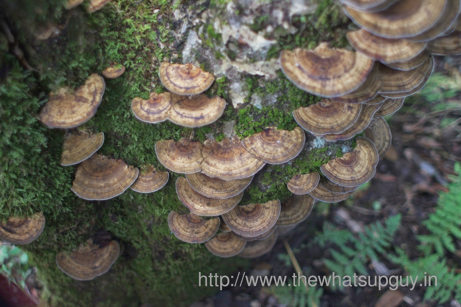 Mushrooms-Roopkund-Trek-With-India-Hikes-Day-2