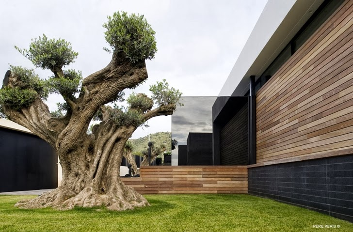 Tree in front of Window House by LADAA in Valencia